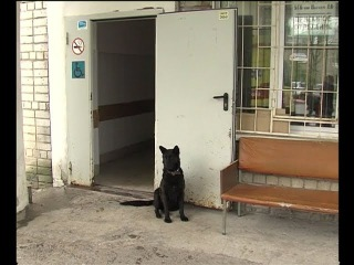 Хатико по березниковски. Пёс несколько дней ждёт хозяина у больницы