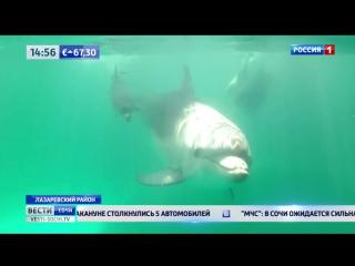 Сразу два малыша родились в дельфинарии в Сочи