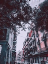 Покрас Лампас фото #41