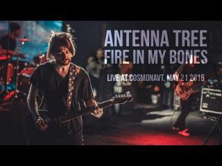ANTENNA TREE - Fire In My Bones (NCA Exclusive Demo, 05/21/2016 Live)