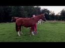 Swedish fitness model Katarina Konow visiting her horses in Sweden 🇸🇪