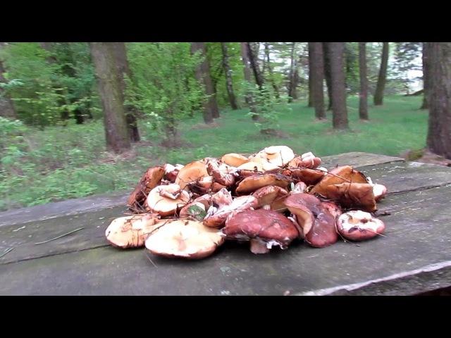 1 травня - день збирання грибів