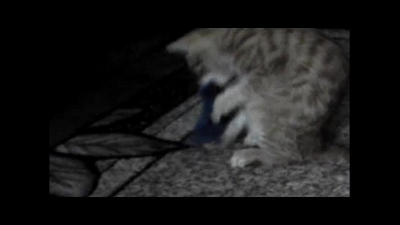 Безжалісний напад рудого монстра на беззахисну мишку Людям із слабкою психікою НЕ ДИВИТИСЬ