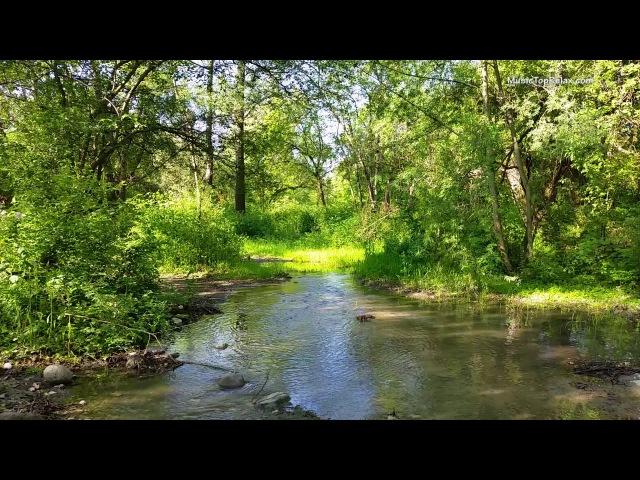Звуки природы пение птиц Звуки Леса для релаксации сна Медитации Relax 8 часов