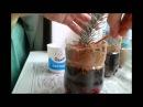 Выращивание голубой ели черенками в домашних условиях
