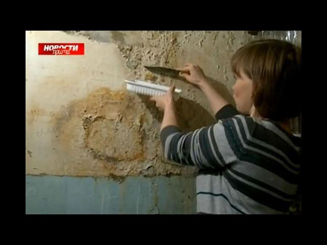 Жители высотки жарят грибы собранные со стен