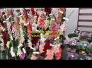 Коллекция гладиолусов семьи Кветковских часть 13 мелкоцветковые