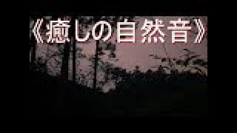 сверчки《癒しの自然音》虫 の鳴き声「TYPE 3」夏の静かな夜 リフレッシュ・ス