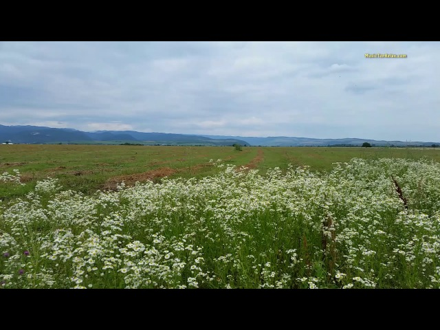 Звуки природы Сверчки и шум ветра шелест травы 3 часа отдыха