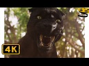 Багира тренирует Маугли Книга джунглей 2016 HD