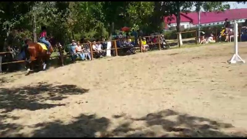 Бархат соревнования ТПКЗ №169 27.08.2017 .90 см