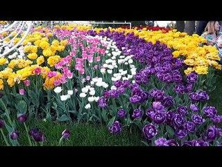 Kyiv today. Выставка тюльпанов на Певческом поле в Киеве 2018. Exhibition of tulips 2018.