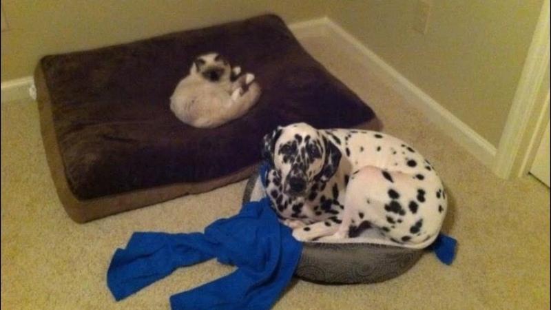 Я РЖАЛ ПОЛ ЧАСА Смешные Коты и Собаки ПРИКОЛЫ С ЖИВОТНЫМИ Cute Cats 126