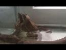 Сношение лягушек