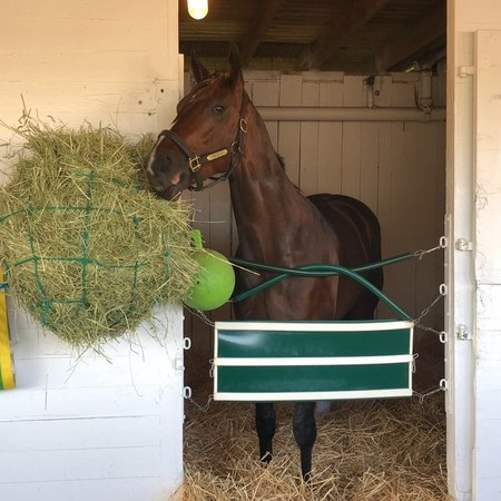 """Thoroughbred Daily News on Instagram: """"Multiple Grade 1-winning Derby contender Bolt d'Oro in his stall after training this morning KentuckyDerby ..."""