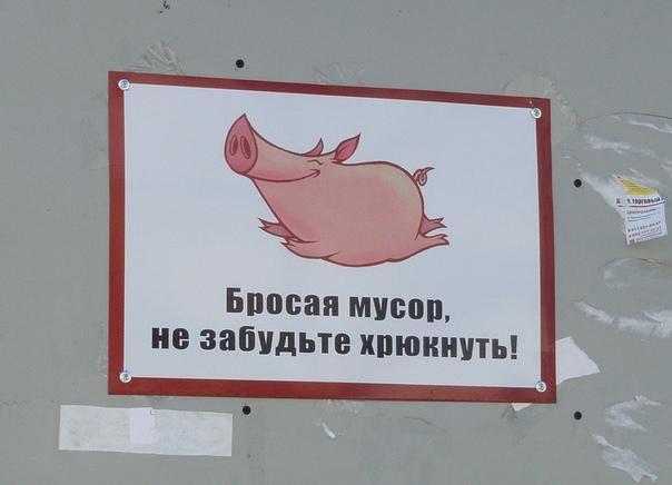 заглушки картинки про свиней которые мусорят что тарелки авторской