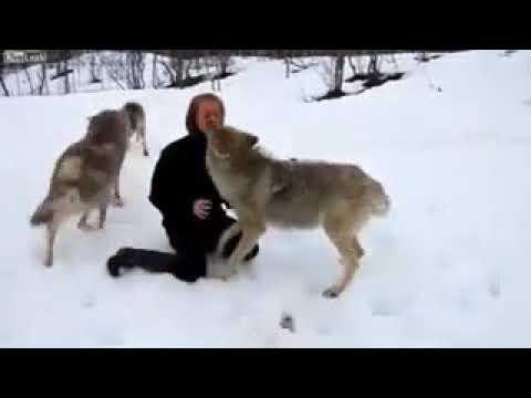 Стая волков и женщина