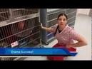 Veterinary Technician Training: Handling a Fractious Cat