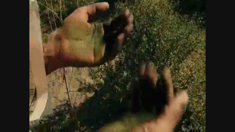 добывание марихуаны козел водолей