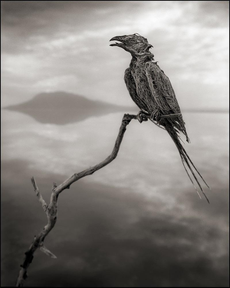 Смертельное озеро в Африке на фотографиях Ника Брандта