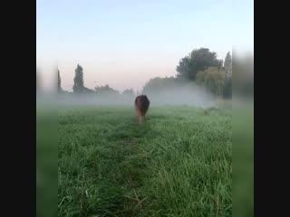 Вышел пёсик из тумана -) Красивый пёсик, красиво вышел -)