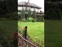 4275). 13.05.2019 - Кошечка Мозаика (дома Муша) уехала домой (видео из дома)