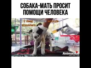 Помогайте животным