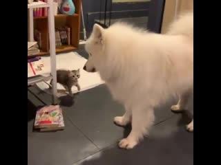 Собакен в шоке от такой наглости