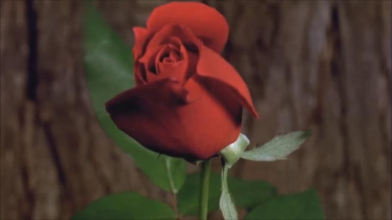 Я Смотрела На Мир СердцемИрина Самарина-Лабиринт