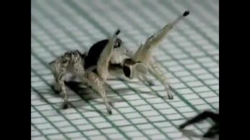 прикол с пауком 360p mp4