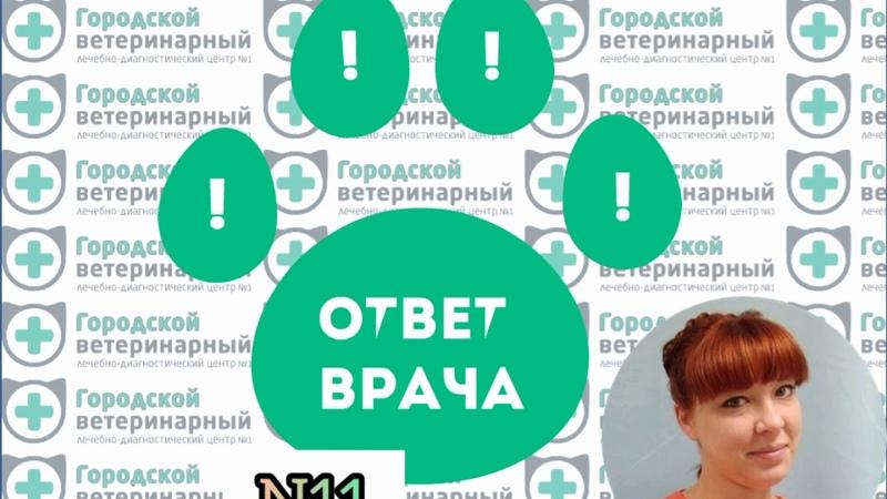 Ответ ветеринарного врача-терапевта, эндокринолога Балашовой Т.А.