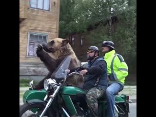 Россия - страна медведей!
