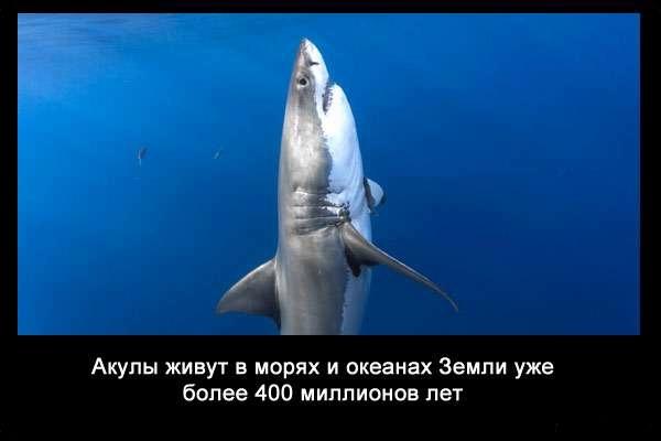 Valteya - Интересные факты о акулах / Хищники морей.(Видео. Фото) - Страница 2 SkDgstJie88
