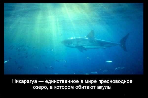 Valteya - Интересные факты о акулах / Хищники морей.(Видео. Фото) - Страница 2 EkbPHXLuwVk