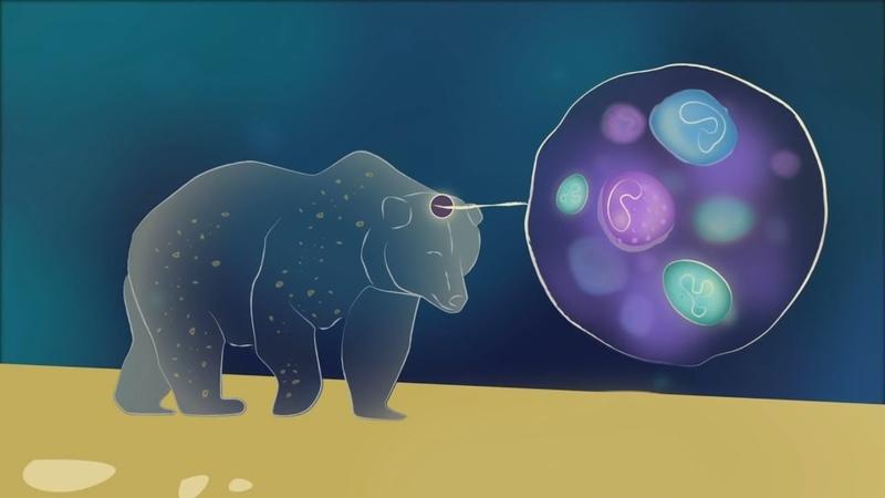 Самый БОЛЬШОЙ одноклеточный организм [TED ED]