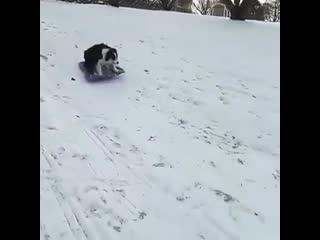 Собака с горки катается на санках