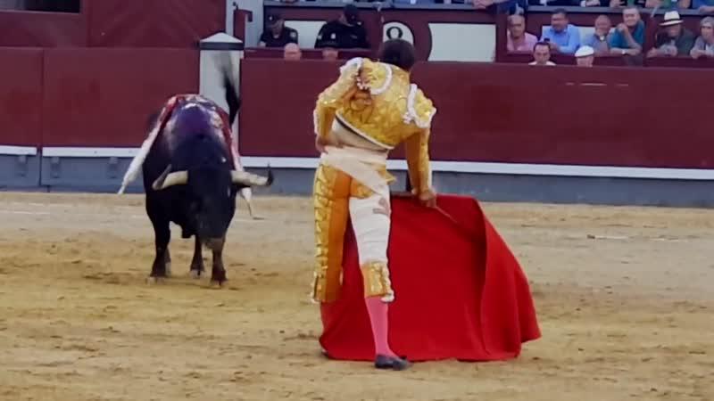 Рока Рей, арена для боя быков в Мадриде. Сан Исидро 2019.Roca Rey, Plaza de las Ventas en Madrid. San Isidro 2019.