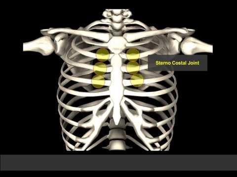 Twist Yoga Poses Active Twist vs. Passive Twist | 3D Yoga Anatomy