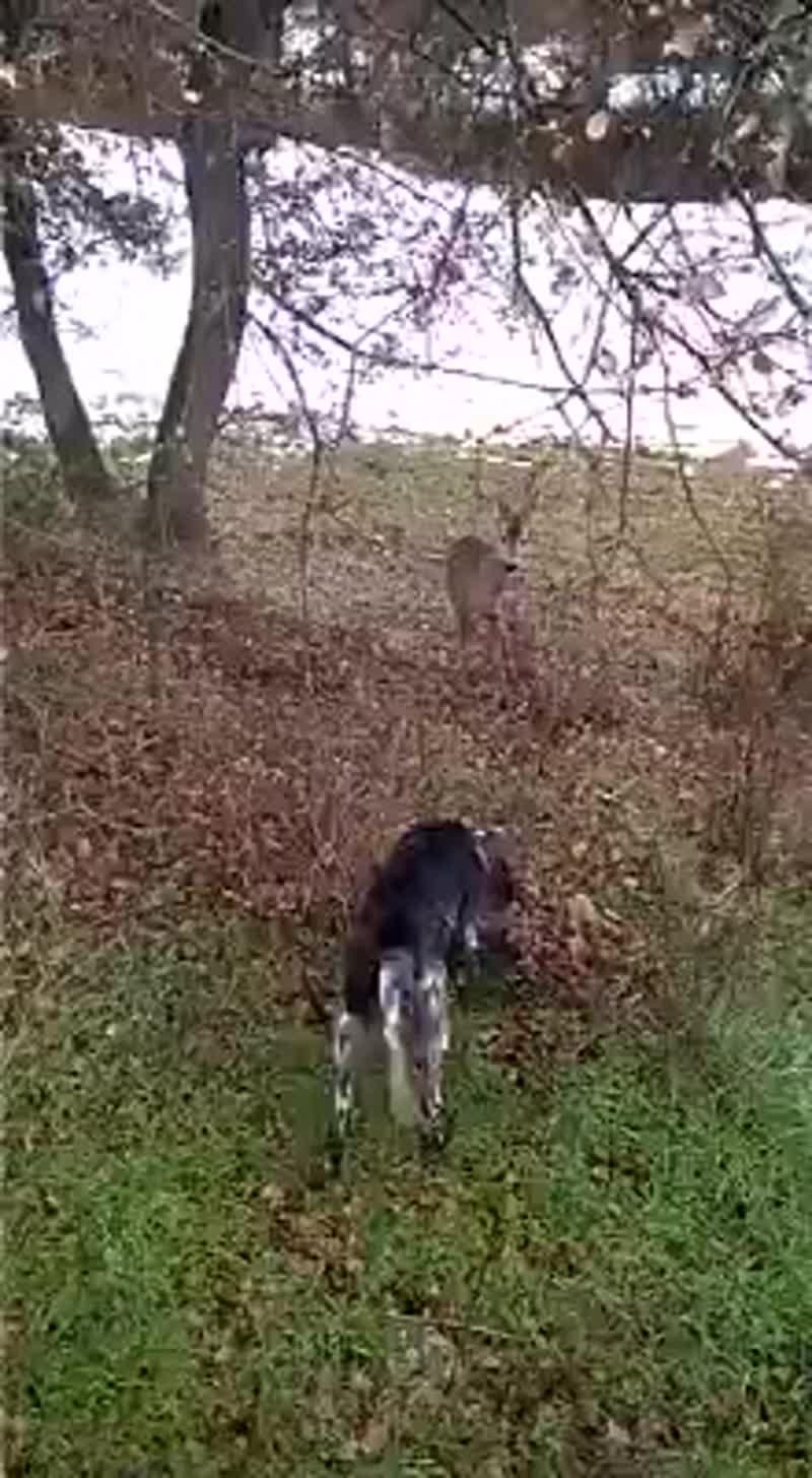 Лучшая универсальная собака для охоты