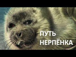 ПУТЬ НЕРПЁНКА THE WAY OF THE SEAL PUP