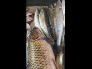 #речнаяРыба #ИринаРыбаРечная❗😍👉🐟ТОЛЬКО У НАС В АЛЬМЕТЬЕВСКЕ❗❗Свежее поступление исамый большой ассортимент рыбы и морепродукто