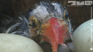 RoboSpy Chick In Bird Prison!