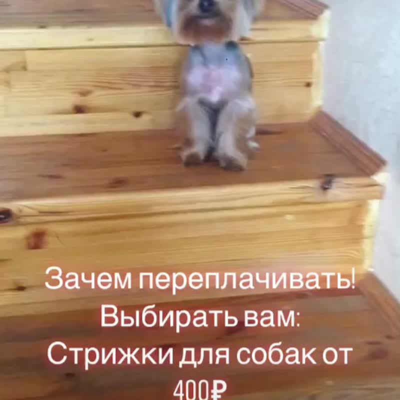 Стрижка для собак от 400₽