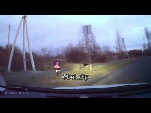 Свора собак погналась за ребенком в Белогорске