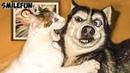 СМЕШНЫЕ КОШКИ 2020 КОТЫ Приколы С Котами и Кошками 2020 Funny Cats 2020
