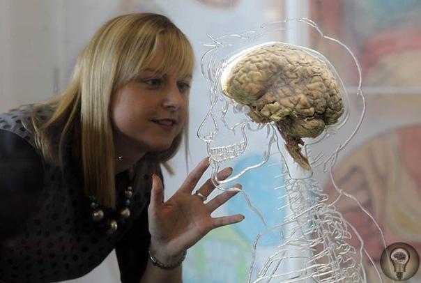 Нельзя использовать на 5% и прочие мифы о мозге Мозг человека принципы его работы, возможности, пределы физиологической и психической нагрузки продолжают оставаться для исследователей одной