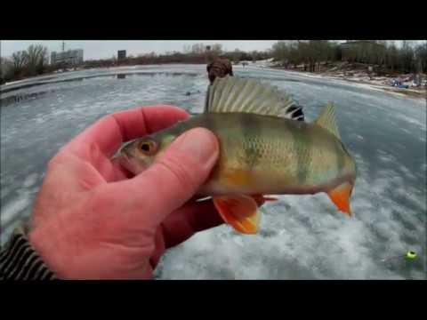 Рыбалка на канале ладожского озера