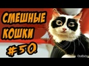 Приколы с Кошками ДО СЛЁЗ Смешные Коты 2017 Видео про котов