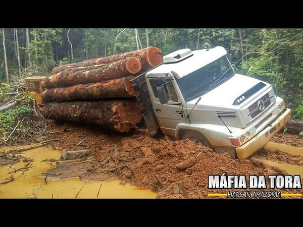 GALERA DA MADEIRA BR