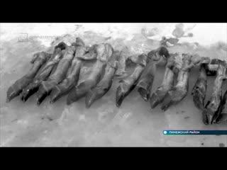 Житель Пинеги застрелил трёх беременных лосих